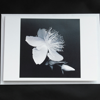 A6 Black and White Flower Greeting Card