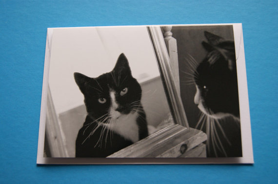 Vanity Cat - A6 Black and White Photography Cute Cats Greetings Card - Nixii Art