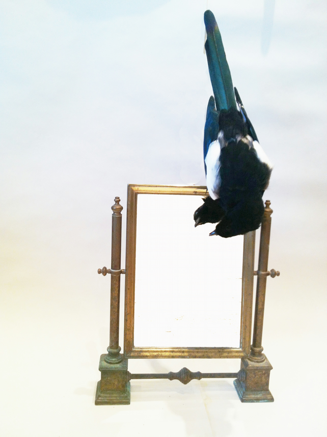 Bespoke Taxidermy Magpie Bird on an Antique Brass Hinged Table Mirror
