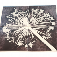 """Aliums"" Set of 4 Glass Coasters"