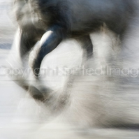 SPRAY - Equine photography, Camargue Horse - Abstract