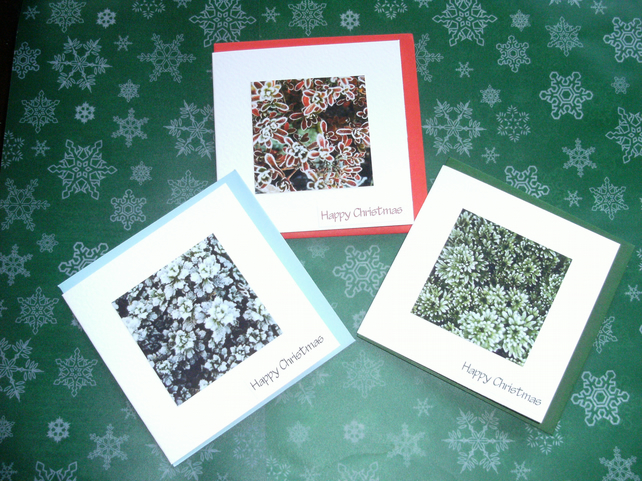 6 x PHOTO CHRISTMAS CARDS - Frosty