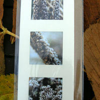 PHOTO CARDS - Liatris triple