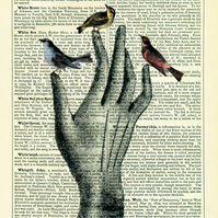 Glove Hand with Birds - Vintage Encyclopaedia Print