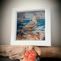 Framed Decoupaged Seagull embellished with Cornish Beach Finds