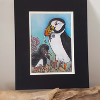"""Puffin and Puffling "" ...Mum feeding chick mounted pastel drawing"