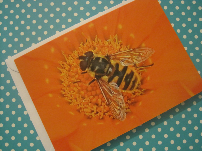 Wasp Blank Greetings Card Bee Orange Flower Nature Wildlife Picture Photograph