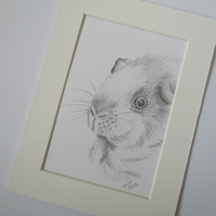 Guinea Pig Pencil Drawing