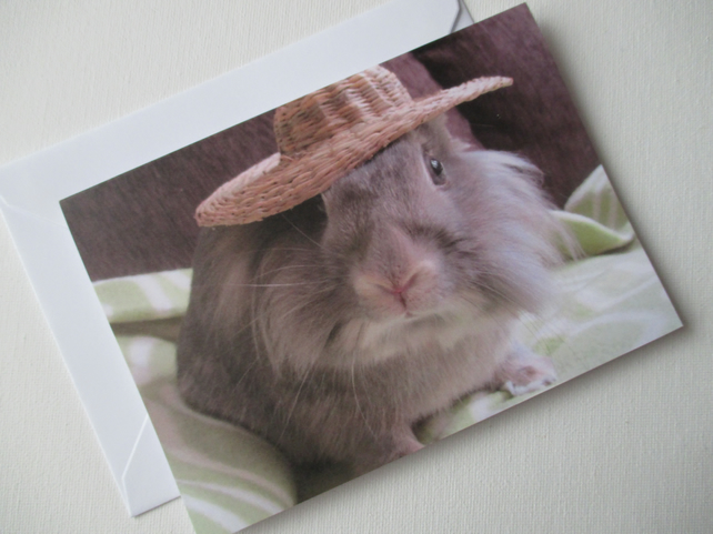 Bunny Rabbit Blank Greetings Card Lionhead Bunny Picture Rabbit Wearing Hat