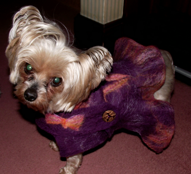 Felted dog coat for Yorkshire terjer