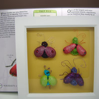 faux taxidermy Beetles quirky unusual gift for a man or woman cave