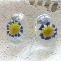 Real Blue Daisy Flower Earrings - Botanical - BLUE DAISY