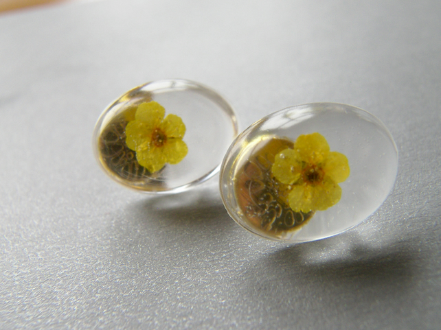 Real Dried Yellow Flower Earrings