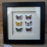 Vintage Style Framed Butterflies