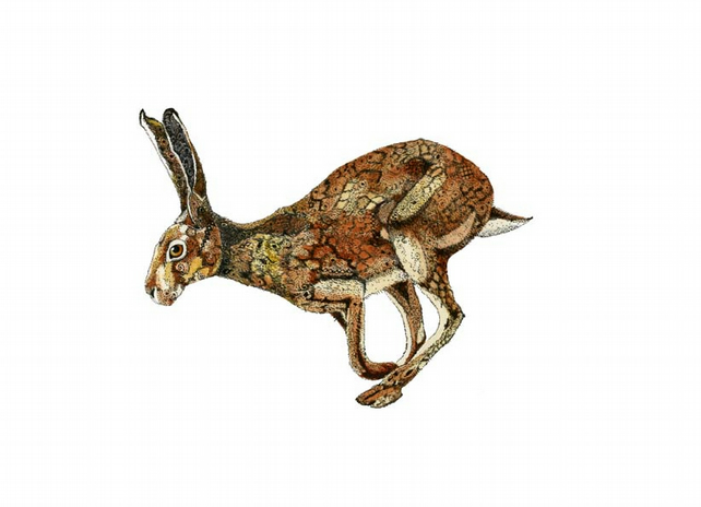 Golden Hare Print Hare illustration Giclee A4 Print