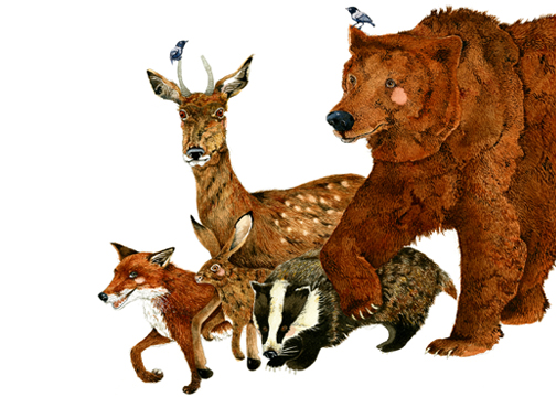 Bear, Fox, deer, Hare and Badger Print. Woodland Creatures Giclee 8x11 print