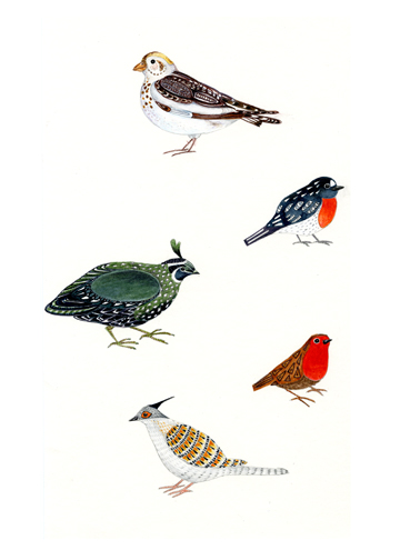 Bird collection art print A4