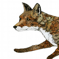 Fox illustration print Running Fox A4 art print