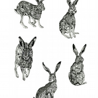 Hare Collection A4 Giclee print illustration Various Hares