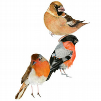 Bird print Robin and two Finches bird group giclee print A4