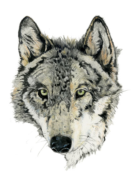 Wolf print Wolf head portrait 8x11 Giclee archival print