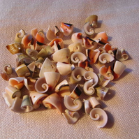 Beads, curly shell pieces
