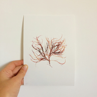 Pressed Seaweed No:9 Giclee Art Print