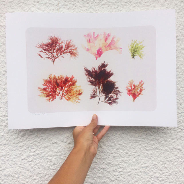 Seaweed Party Seaweed pressing print