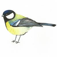 LISTING FOR FIONA  Great-tit birdie print.