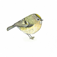 ORIGINAL British garden bird watercolour illustration.  Tiny Goldcrest painting.