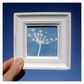 Cow parsley Cyanotype Framed