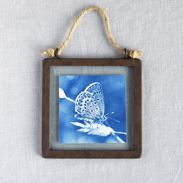 Silver Studded Blue Butterfly Cyanotype in industrial style metal & glass frame
