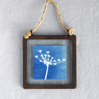 Seed Head Cyanotype in industrial style metal and glass square frame
