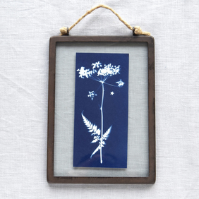 Cow Parsley Cyanotype in industrial style metal and glass frame