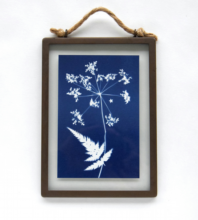 Large Cow Parsley cyanotype in industrial style metal & glass frame