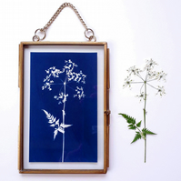 Cow Parsley Cyanotype No. 3 in gold edged frame