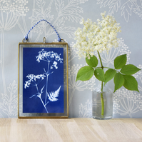 Cow Parsley Cyanotype No.5 in gold edged glass hanging frame