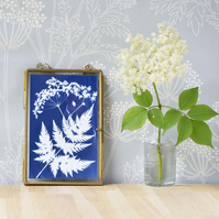 Cow Parsley Cyanotype No. 2 in gold edged frame
