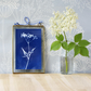 Cow Parsley Cyanotype No.6 in gold edged glass hanging frame