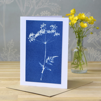 Cow Parsley Cyanotype card No. 4
