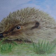 Hedgehog Art Greetings
