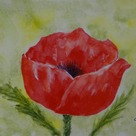 Watercolour Poppy Appeal OSWOA ORIGINAL