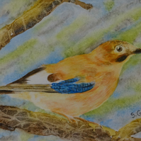 Watercolour Bird Jay OSWOA ORIGINAL