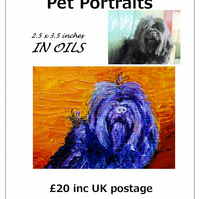 Pet Portrait ACEO Miniature in OIL