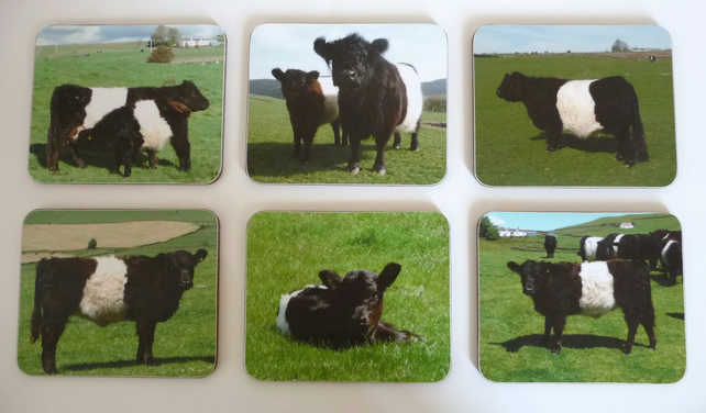 Box of six Belted Galloway coasters