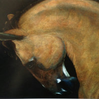 Horse Limited Edition Print of a Pastel drawing