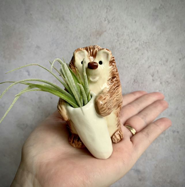Handmade pottery Hedgehog Planter, with real air plant