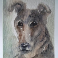ACEO Old Grey Lurcher
