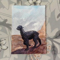 Aceo Alpaca watercolour