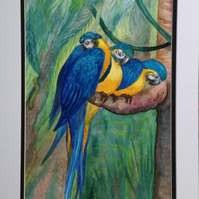 'Three Parrots' watercolour painting